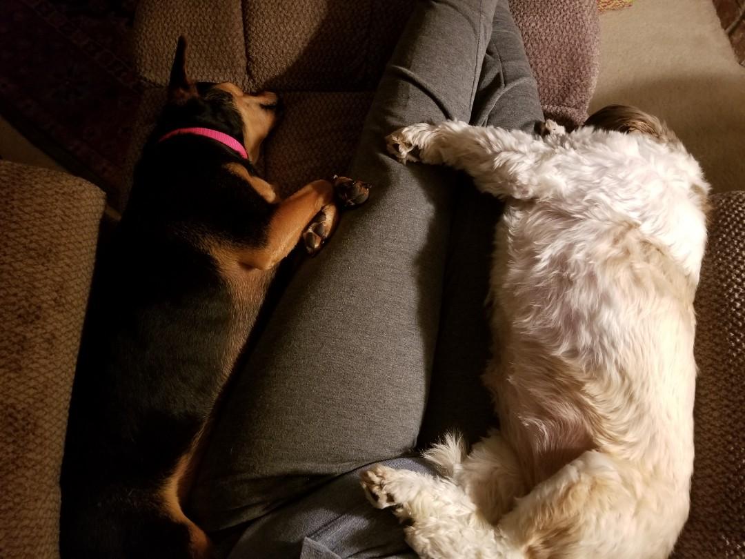 VIP Petsitting, finished up overnight sitting with Hazel and Sadie.