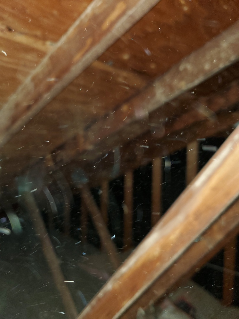 Investigating moisture issues in a home in Ellisville, MO. Found excessive moisture in the attic leading to truss uplifting.