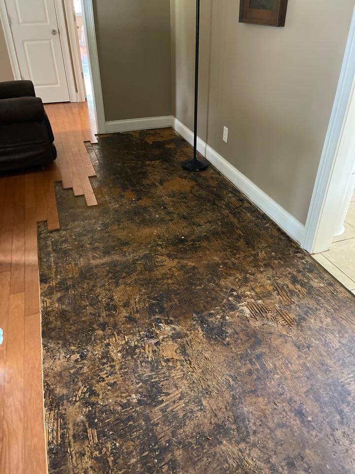 Madison, AL - Dehumidifier failed flooded the living space