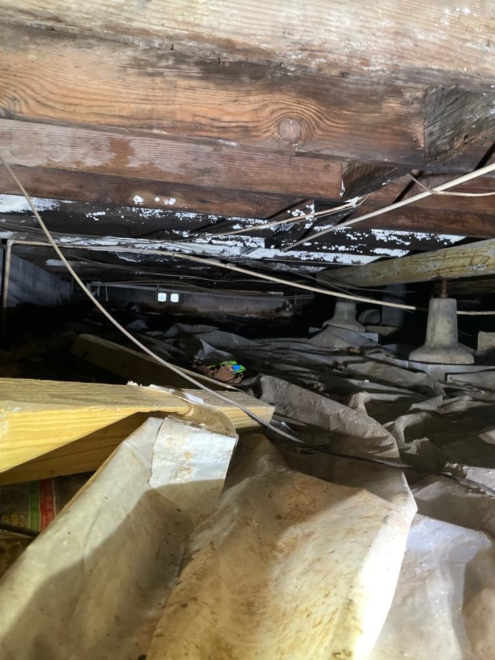Guntersville, AL - Mold removal