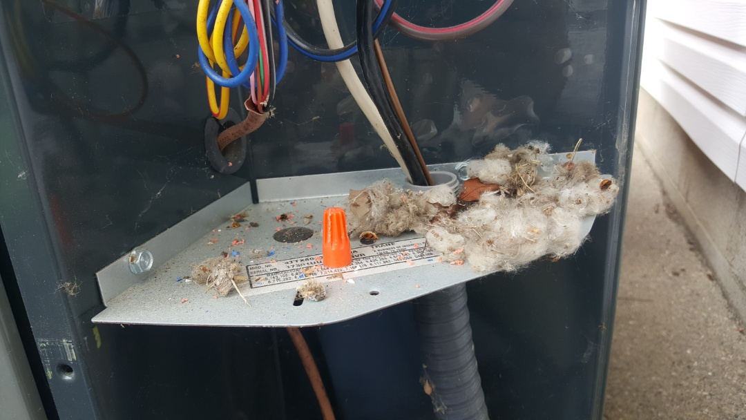 Sunbury, OH - 1 year old Trane xl18i high efficiency AC condenser  Rodent nesting