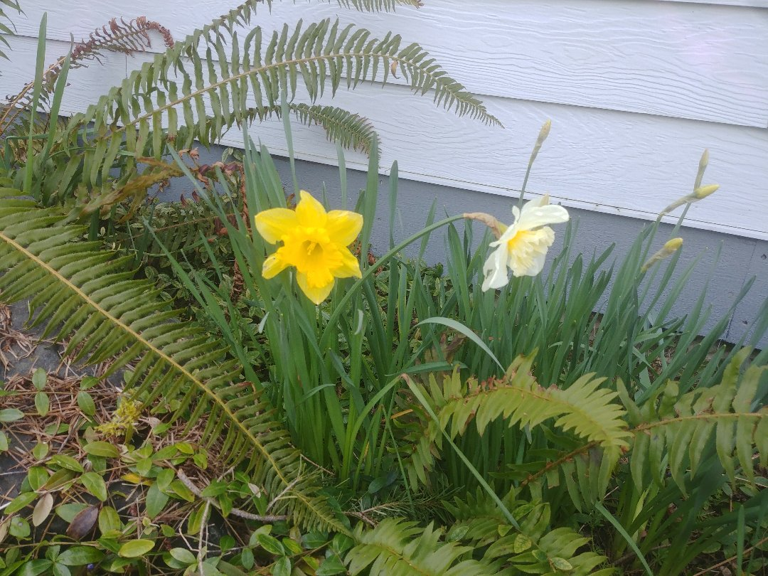 Spring time Pest control in yelm