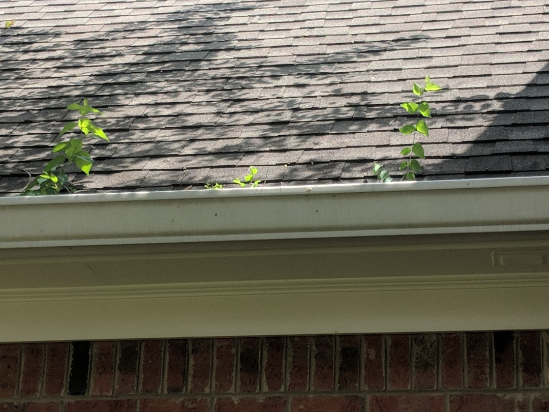 A good indicator of gutters that need servicing are trees growing inside of them.... Gutters should be cleaned out regularly. Depending on the amount of trees in the area, as ofter as every 3 months!