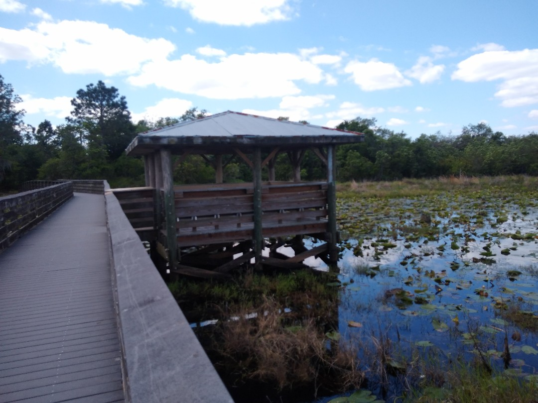 Bartow, FL - Roofs in wild places tend to get beat up a little more
