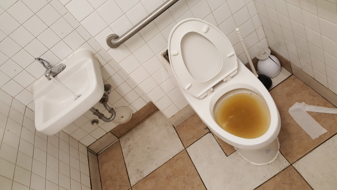 South Salt Lake, UT - Clogged toilet in South salt lake city