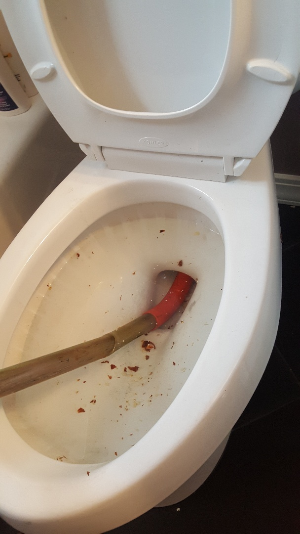 Clogged toilet in holladay