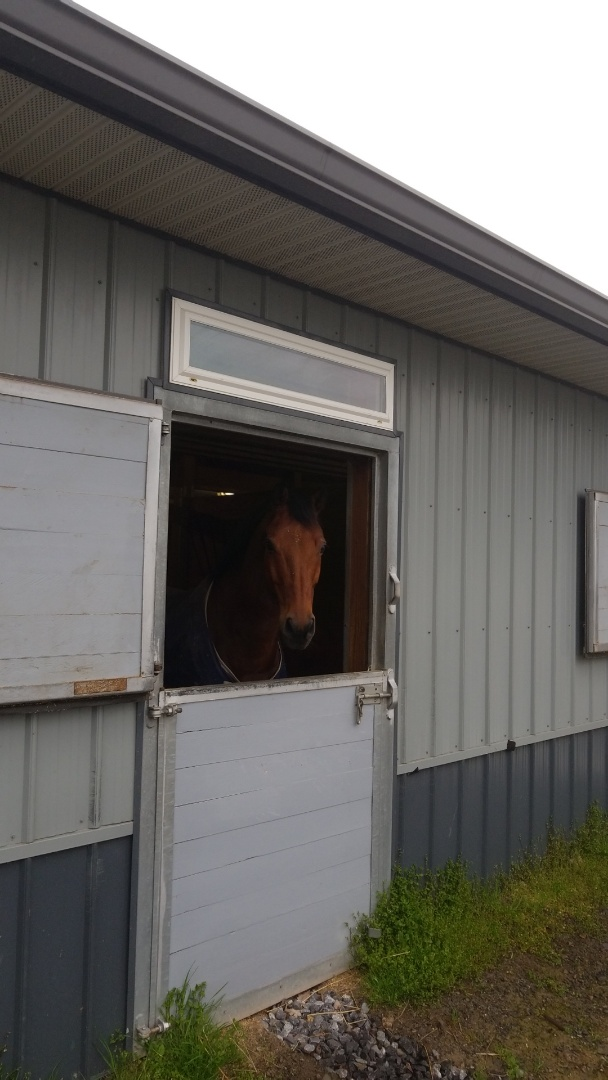 Cazenovia, NY - We're not horsing around with these barn gutters