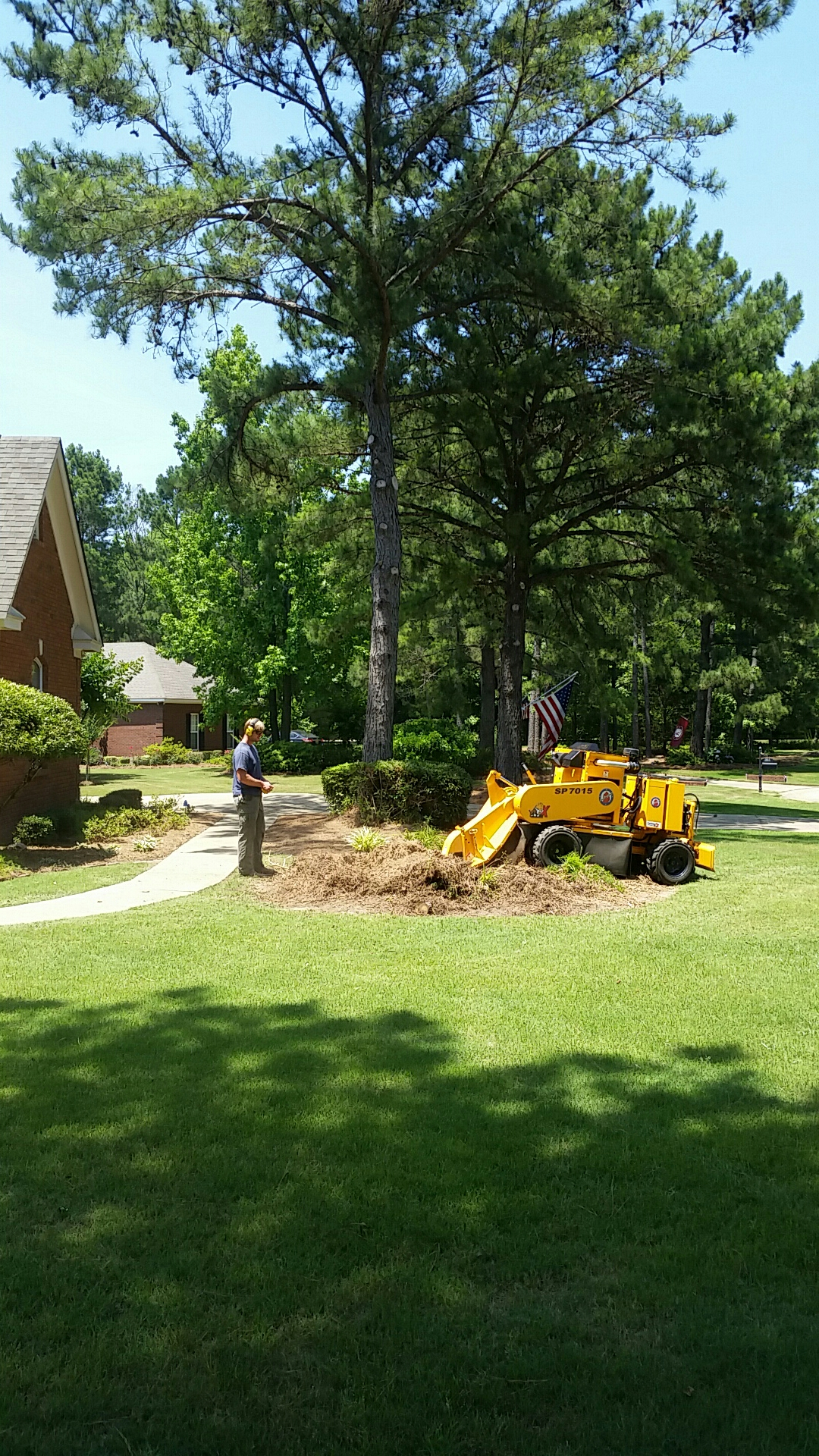 Pike Road, AL - Landscape renovation project Residential Services remove pine tree cut and core out stump preparations for new landscape bed. Project will include Japanese maples procumbens Juniper drift roses and hydrangeas