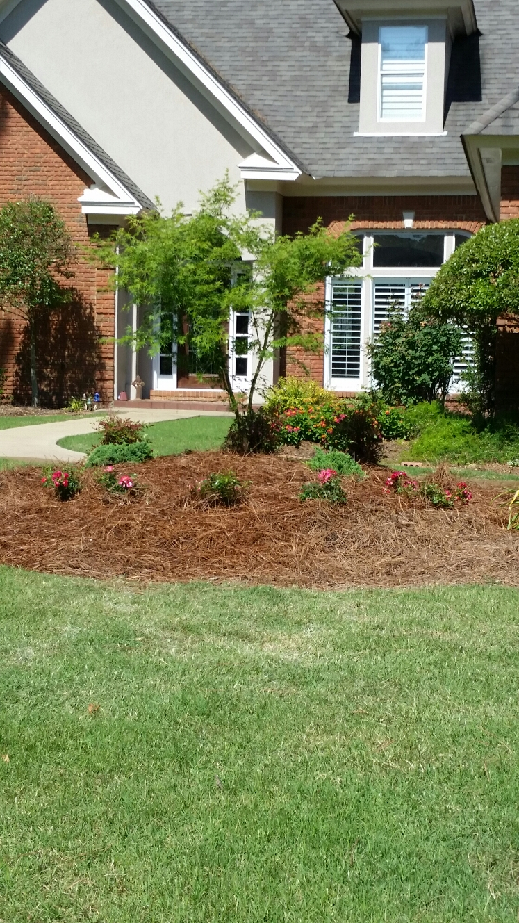 Pike Road, AL - Landscape improvements to existing clients residence. installation of maple trees ,roses nandina's, evergreens At mrs.  Ingram home in Pike Road Alabama