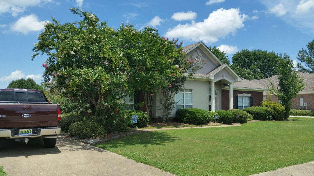 Montgomery, AL - Lawn and Landscape Maintenance clean up service call, remove undesirable trees from landscape, groom existing crapemyrtles prune shrubs,install fresh pine straw, mowing edging trimming of lawn. fertilization and weed control application for new maintenance clientBefore and after photos