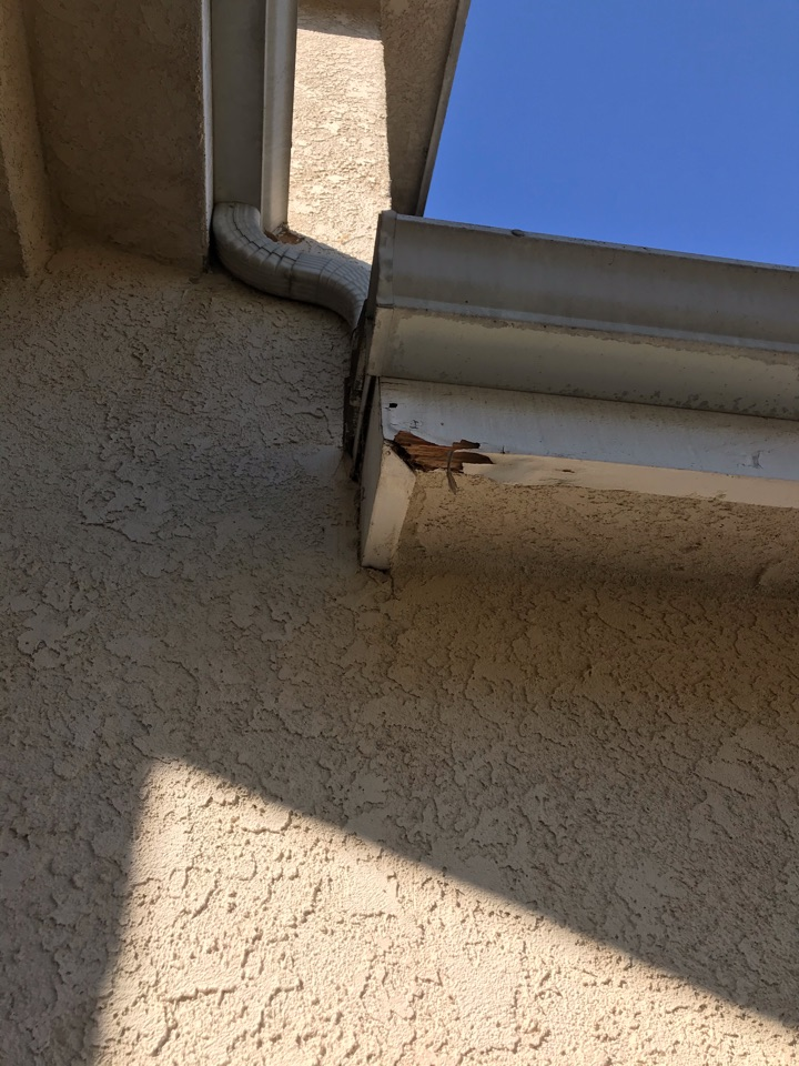 Termite activity in the fascias