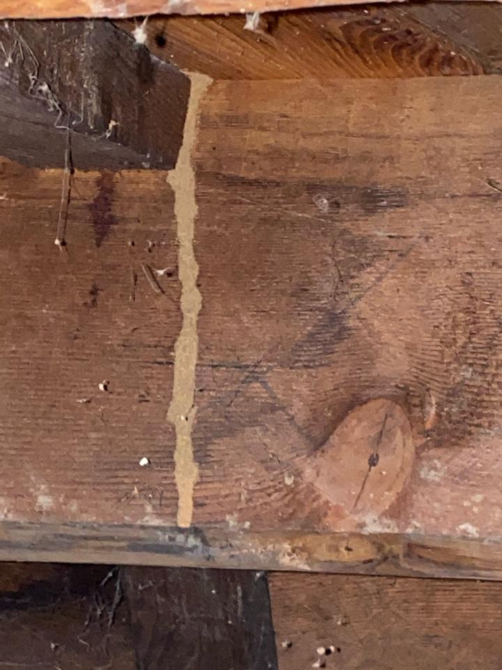 Subterranean termites at sub area