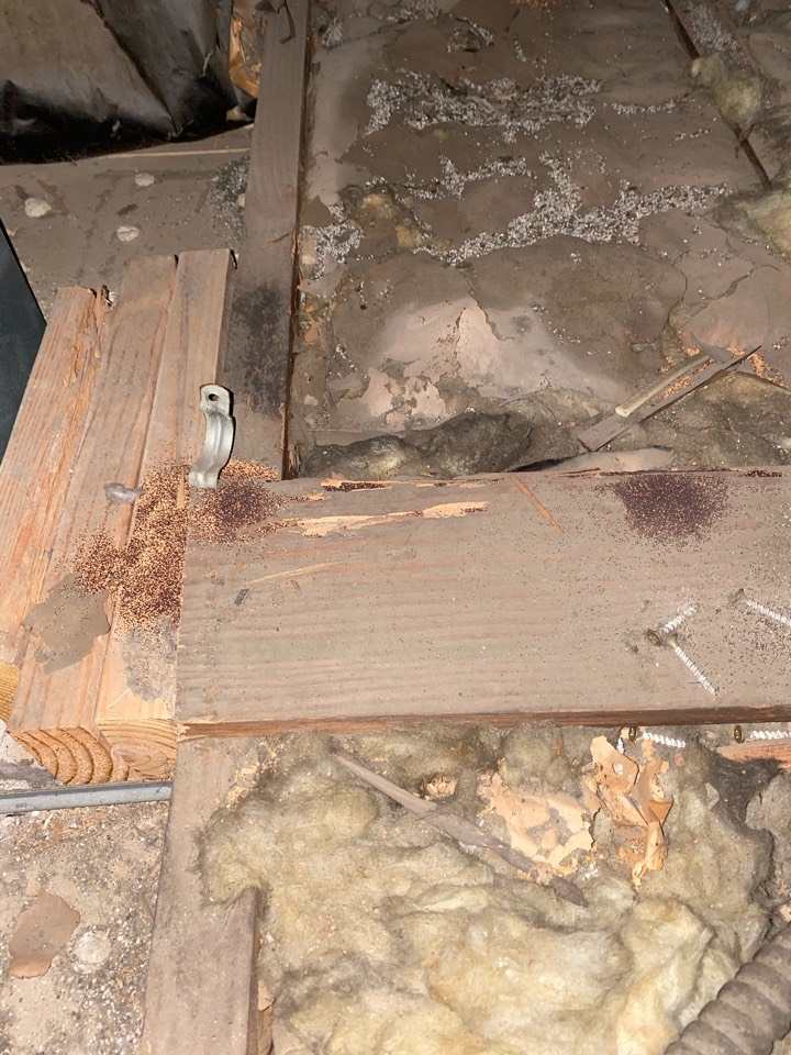 Drywood termite droppings attic