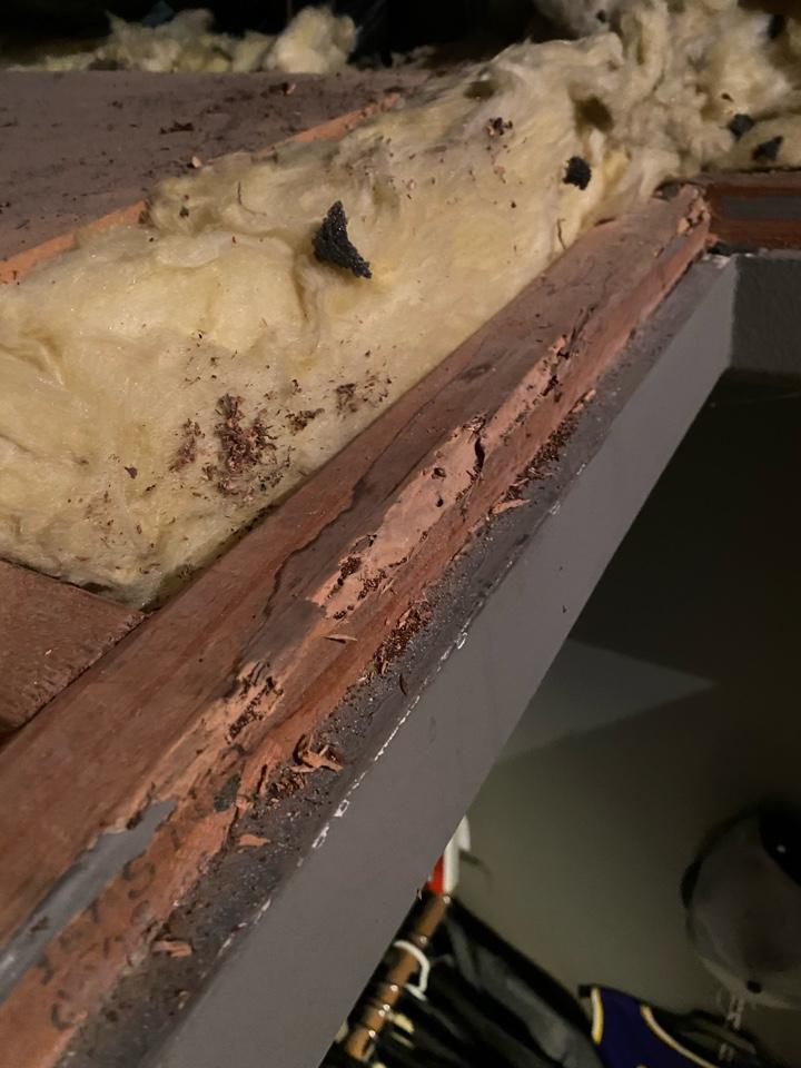 Termites attic