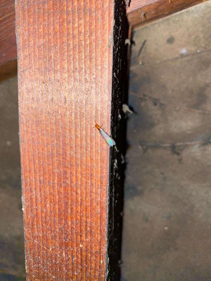 Swarmer at garage framing