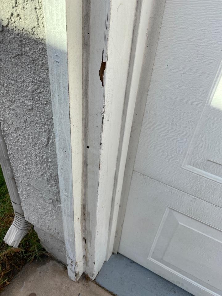 Garage door jamb drywood termites