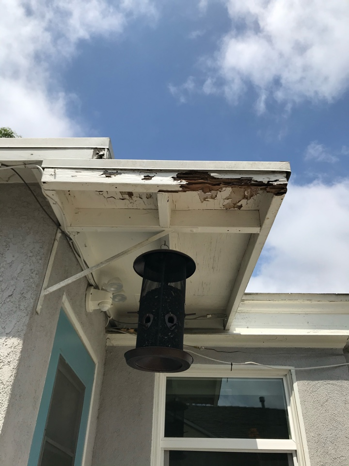 Termite damage at rafter tail