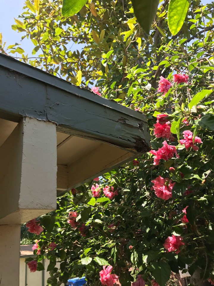 Termite damage patio