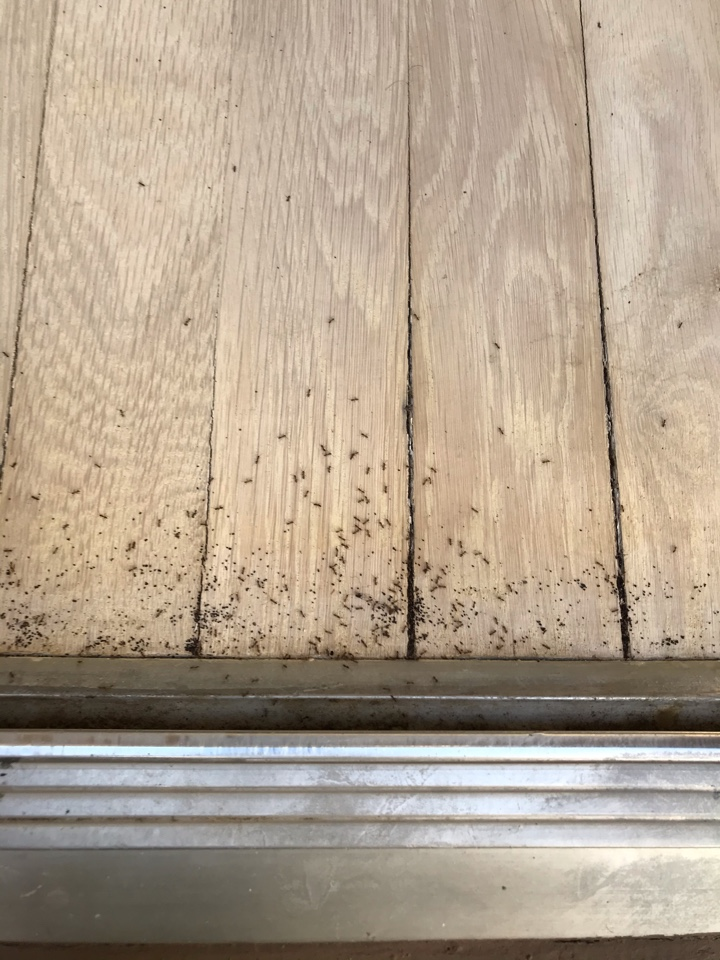 Ant infestation in the home.