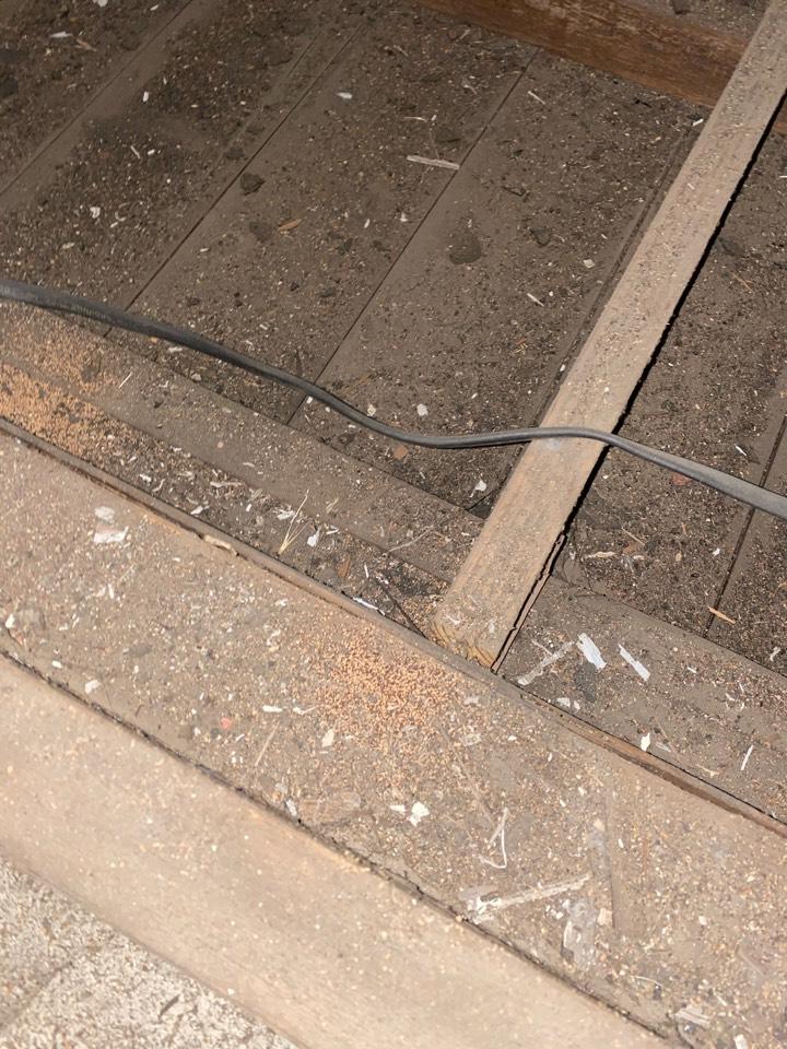 Drywood termites attic