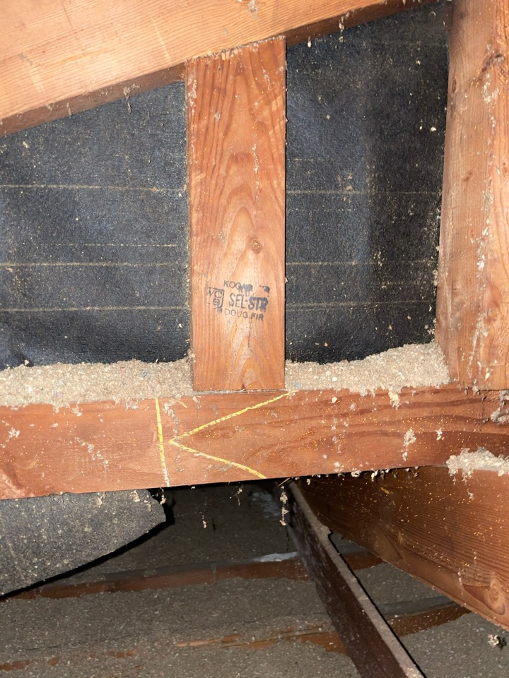 Dry wood termite in the attic area