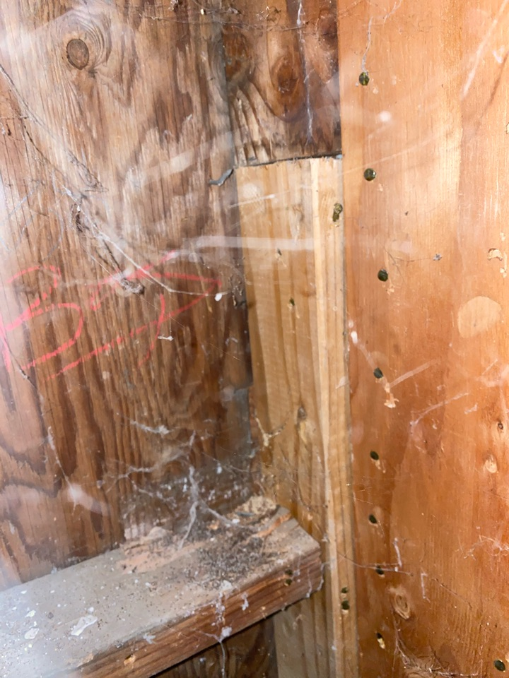 Drywood termites sub framing
