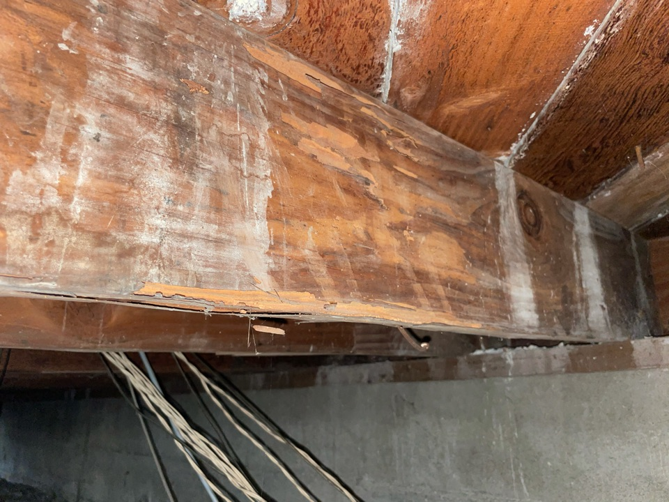 Termite activity on the crawl space
