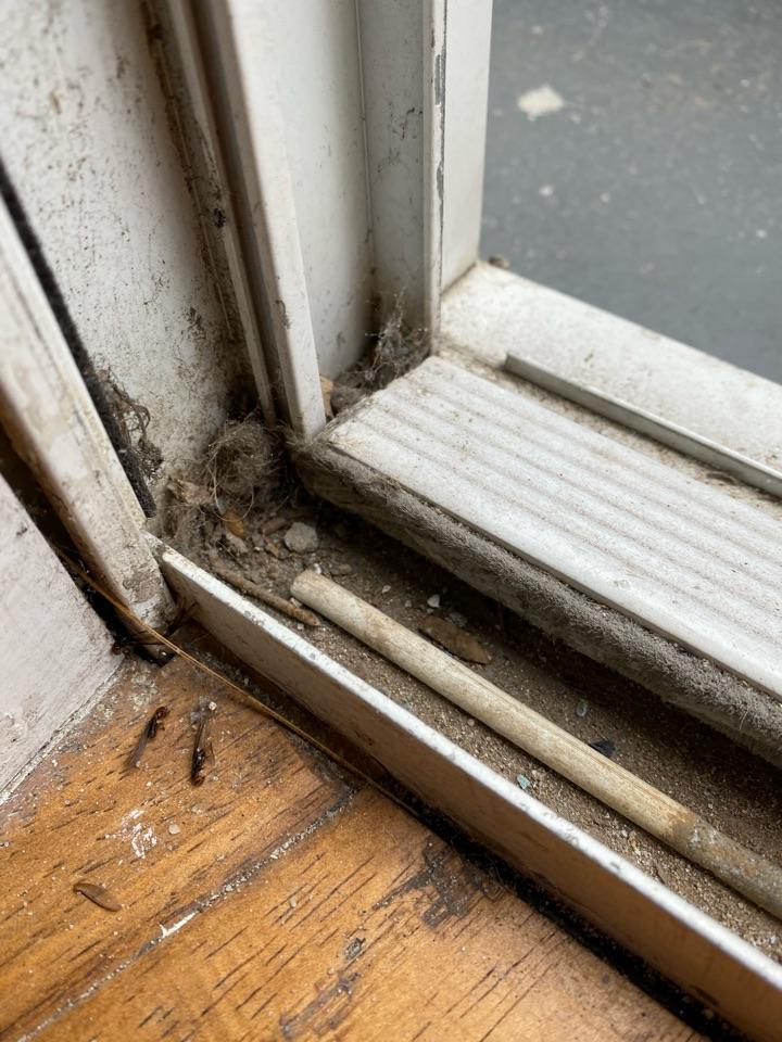 Drywood termite swarmers at slider door