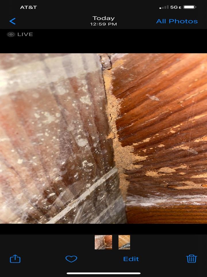 Subterranean termites at sub