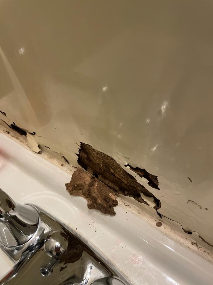Subterranean termites located in the bathroom walls.