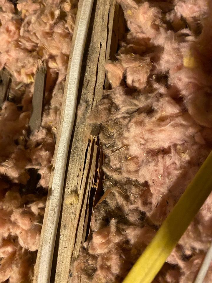 Termite damage attic