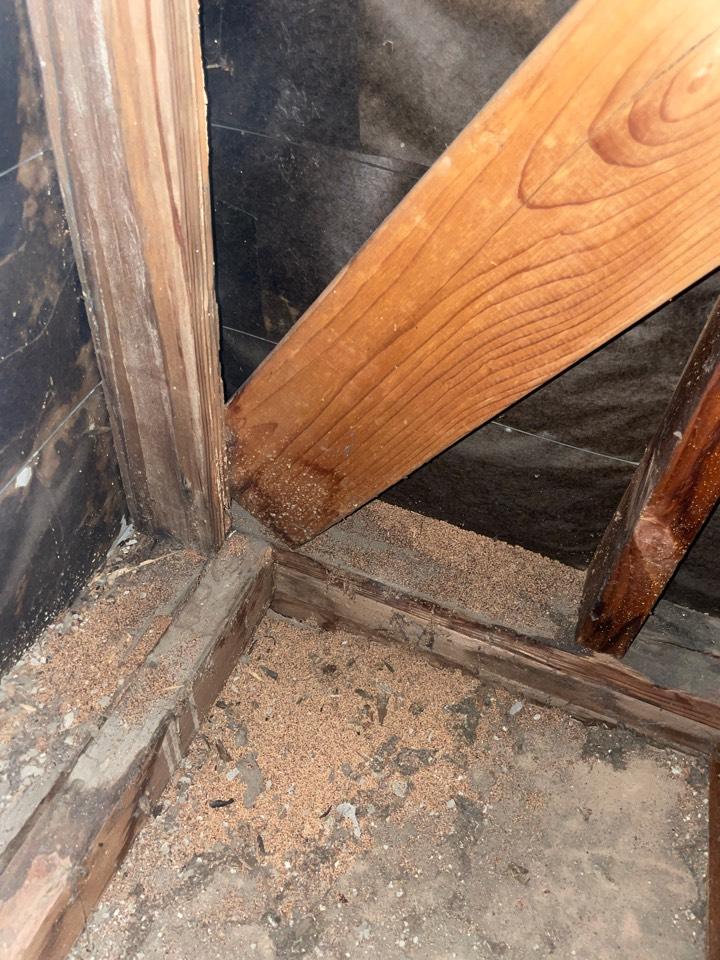 Termite droppings in the attics
