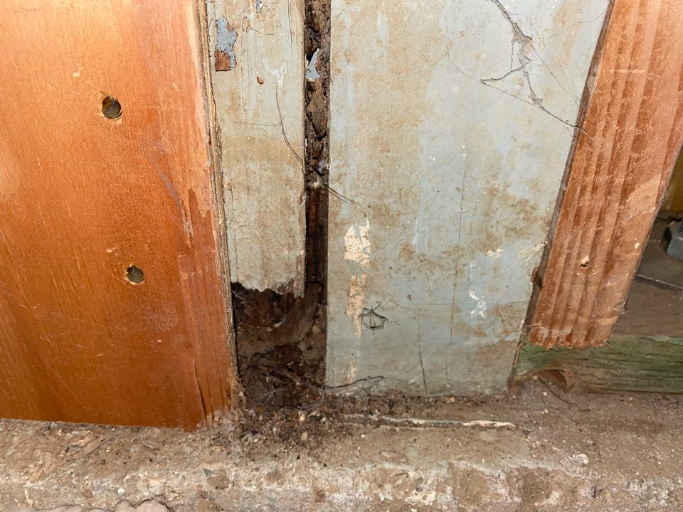 Drywood termites at sub flooring