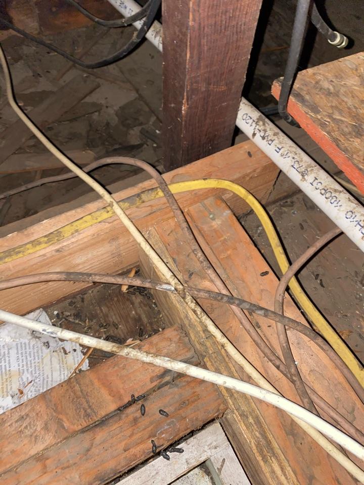 Termites at attic