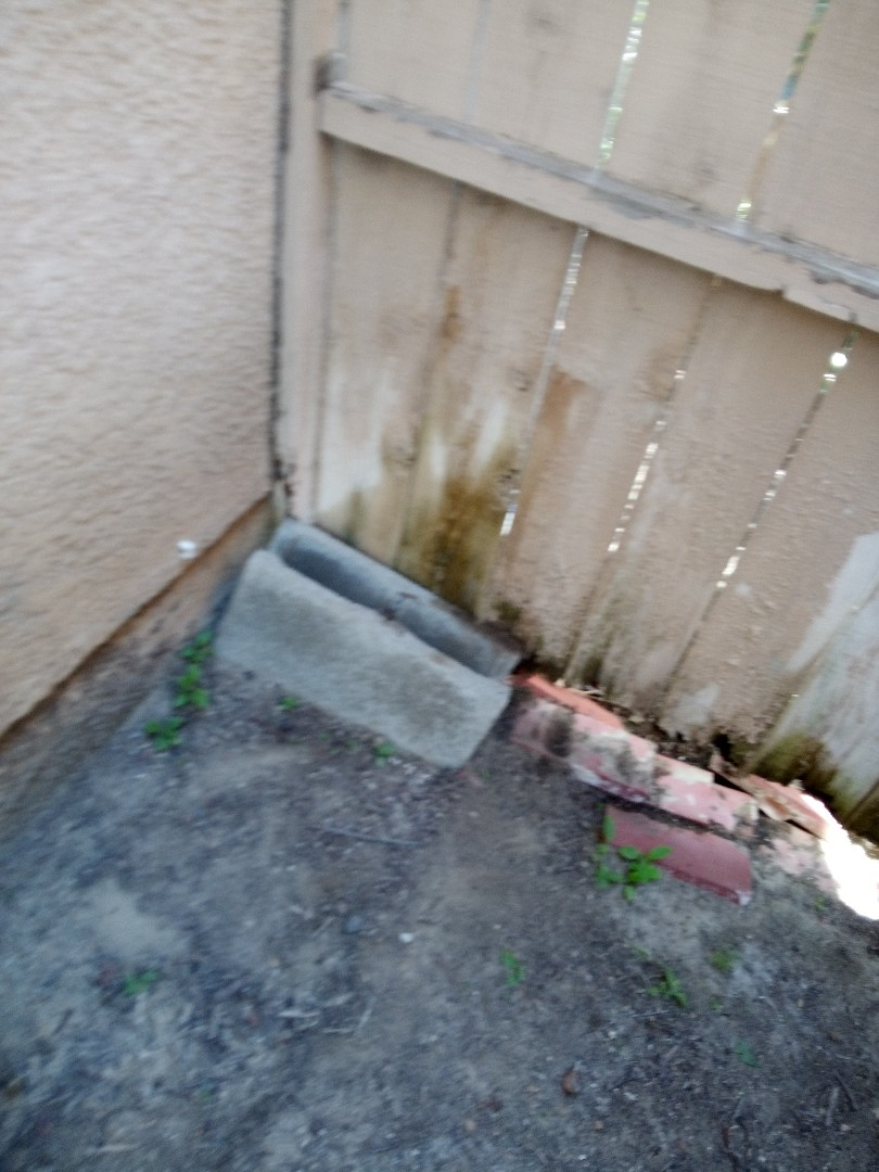 Pest control exterior also possible termite damage