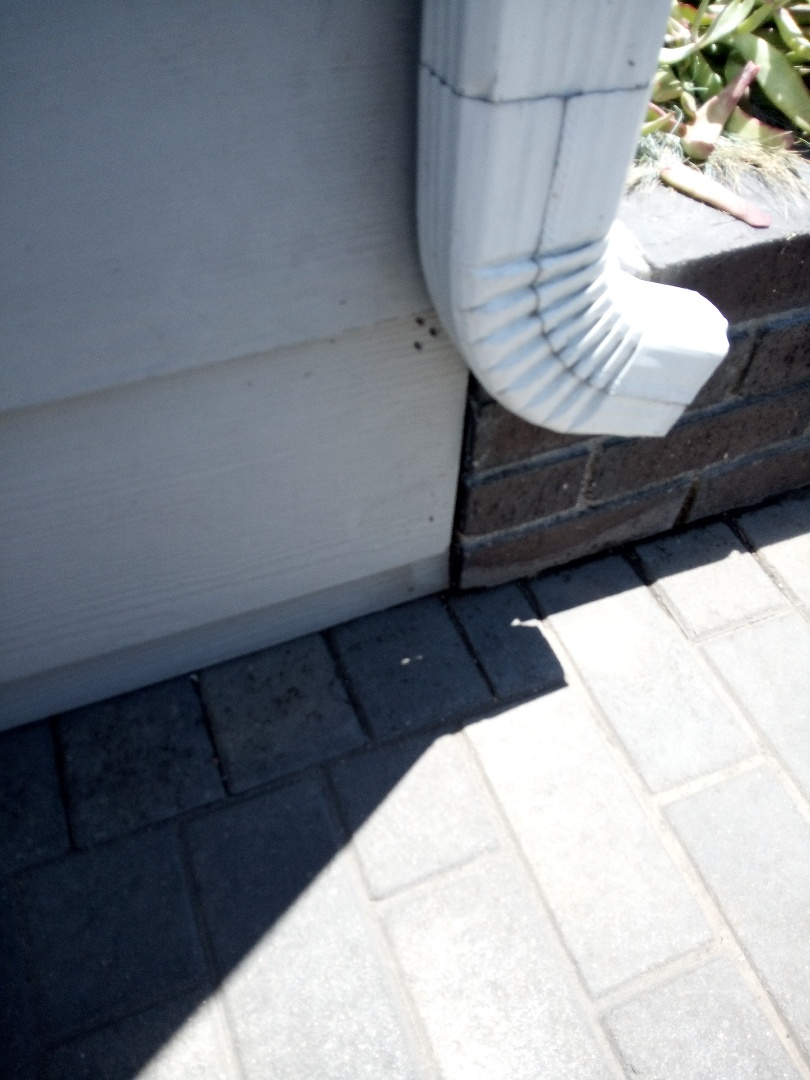 Ant job, treating the exterior with Alpine wag and interior with an ant gel bait