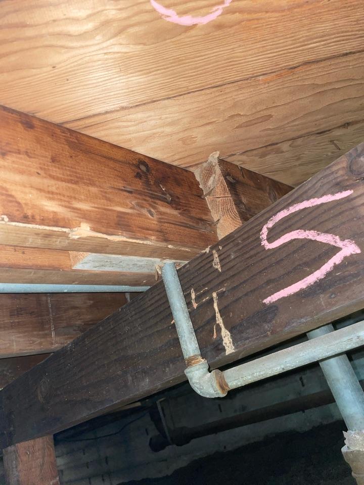 Subterranean termites in the sub area