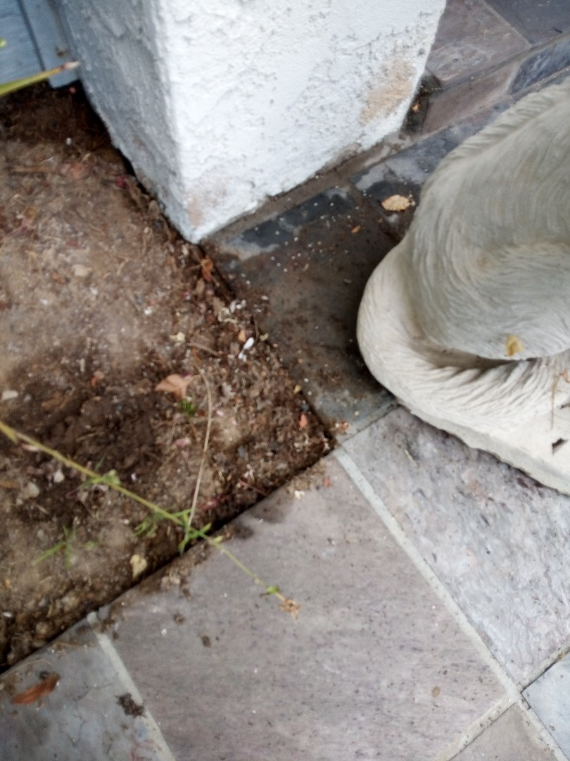 Pest control target: ants. Treat with Termidor exterior and gel bait interior.