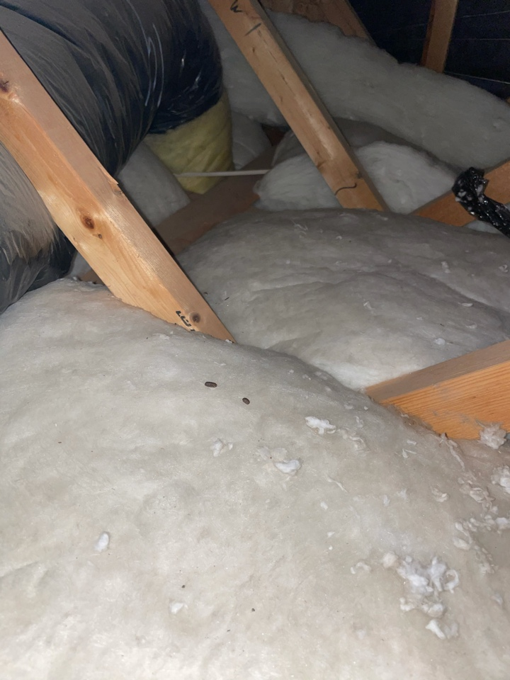 Rodent activity in the attic