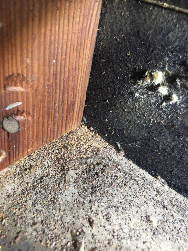 I found some drywood termites frass in an attic cripple