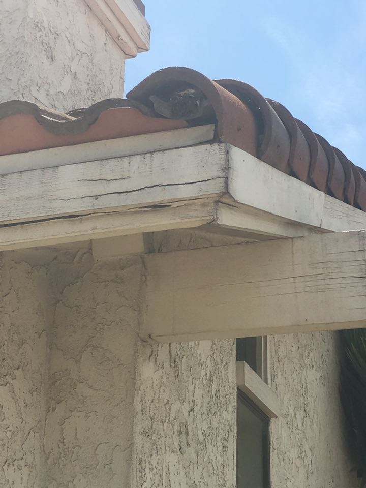 A fascia damaged by drywood termites that is going to be replaced