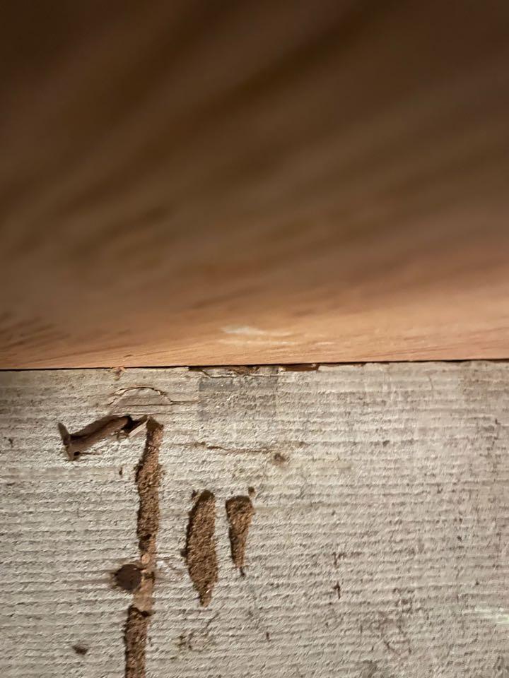 Subterranean termite mud tubes in the crawl space