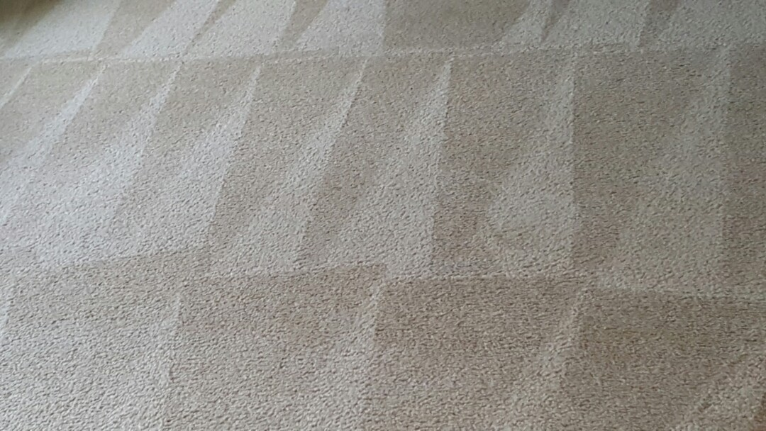 Oswego, IL - carpet cleaning