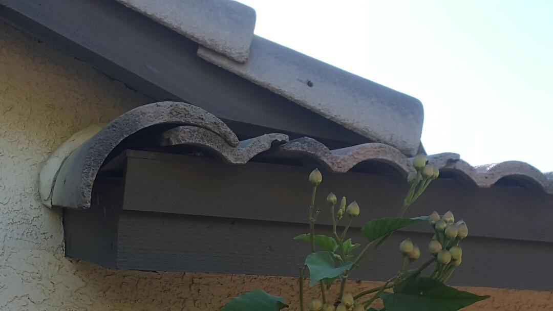 Mesa, AZ - Slipped tile