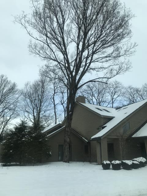 Dayton, OH - Inspecting a tree too close to a house in the Dayton / Centerville area.  Needs a tree removal