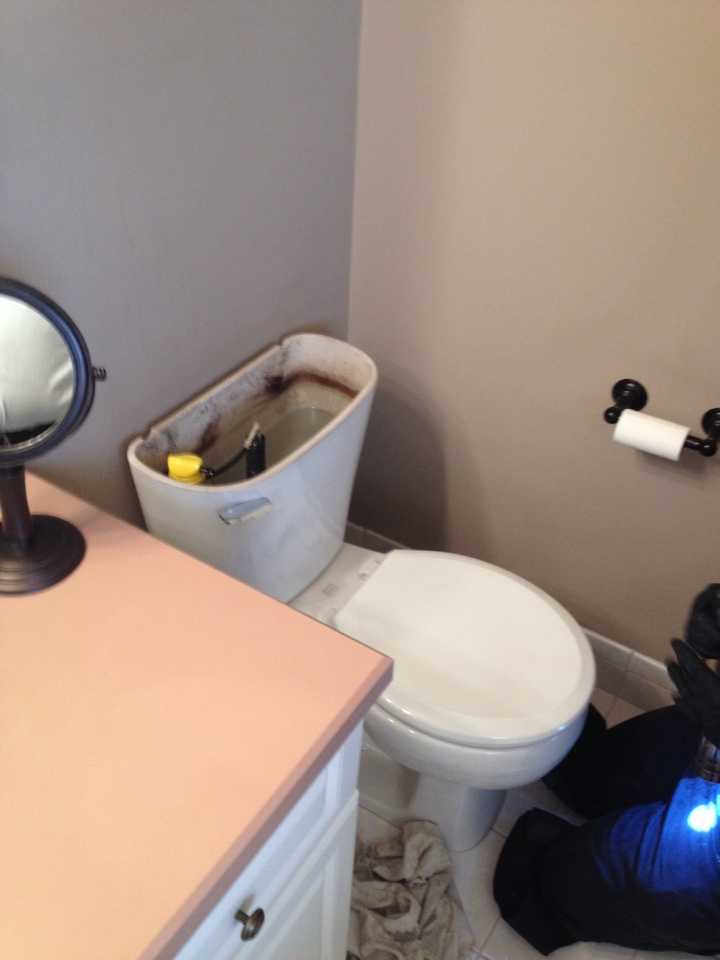 Toilet repair, replace flapper and automatic fill valve.