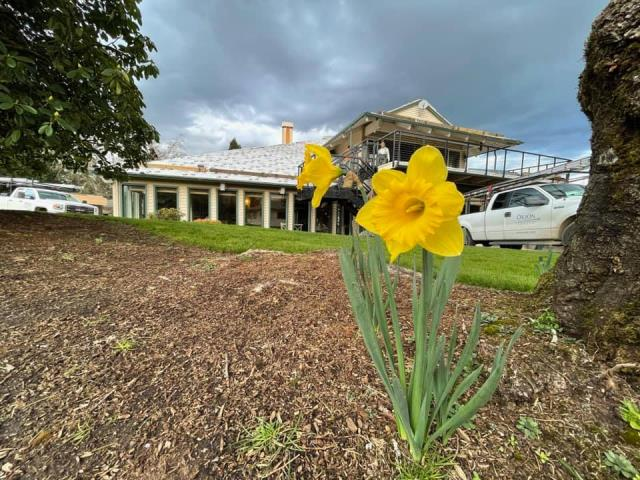 Portland, OR - The loan daffodil at our jobsite. We are currently replacing a shingle roof on this clubhouse in Portland. We are installing new GAF Composite shingles