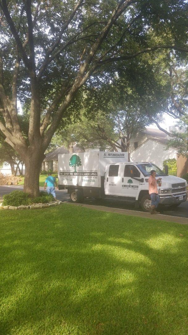 Dallas, TX - Storm damage tree Trimmer.   HailHurts.com