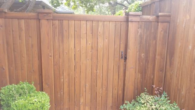 Dallas, TX - Fence staining