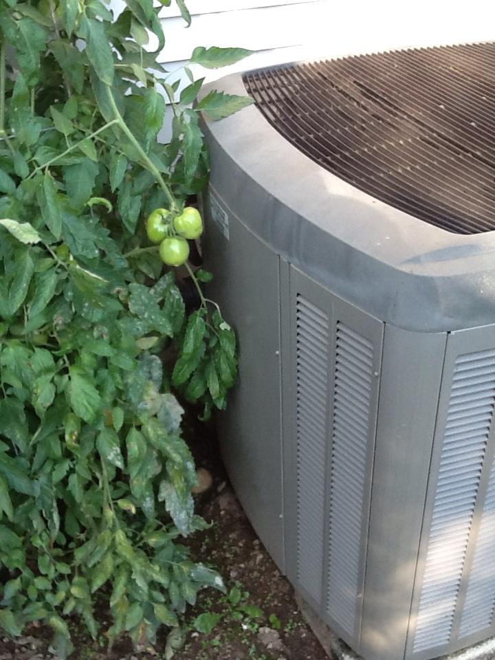 Monroe, WA - Maintenance on a Lennox heat pump system in Monroe. That tomato plants in the way but not to bad